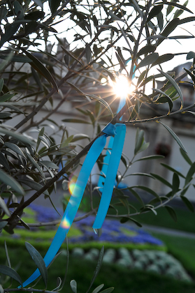 Turquoise ribbon on Olive Tree